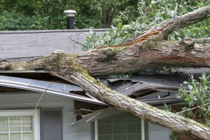 tree roof damage