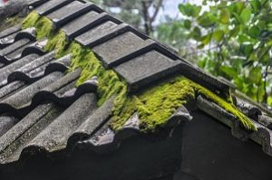 How to Keep Moss and Algae Off Of Your Asphalt Roof
