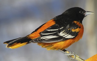 4 Tips for Keeping Birds Out of Your Gutters